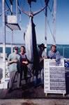 3.1.2000 Grand Slam aboard boat DMS, 3 Striped Marlin, 1 Black Marlin and 180 Kg Blue Marlin.
