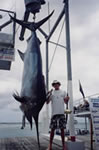 Dave Venn's 520 lb Black Marlin taken aboard Liberty during White Sands Tournament 2000