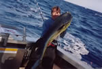 "Tony Carnevale aboard Marlin Feeder captured a 18 Kg Mahi Mahi with a ""Stripy"" ""Big Ripper"" lure."
