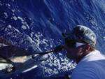 ANGLER: David Jenkins (caught his first Marlin) SPECIES: 160 Kg Black Marlin